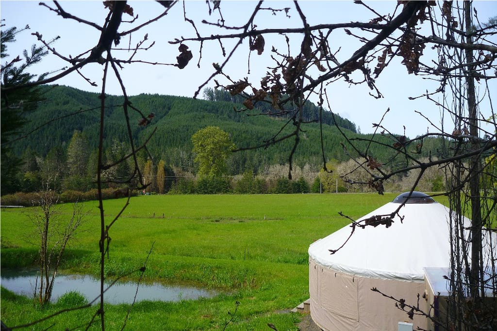 Yurt, pond, and views.