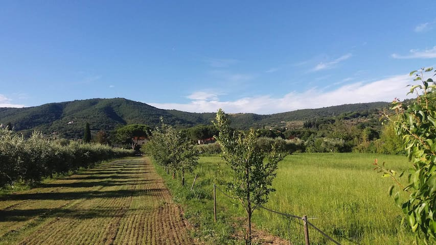 Agriturismo Il Gabbiano - Passignano sul Trasimeno - Casa