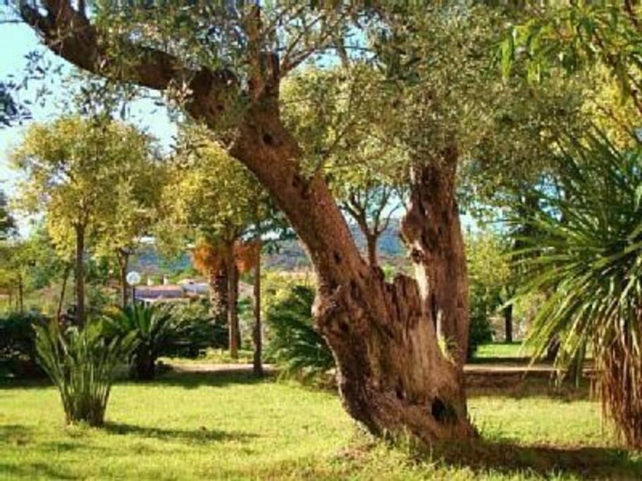 Il giardino confina con una pineta pulita e recintata di 4000mq