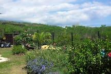 Le jardin sans vis-à-vis