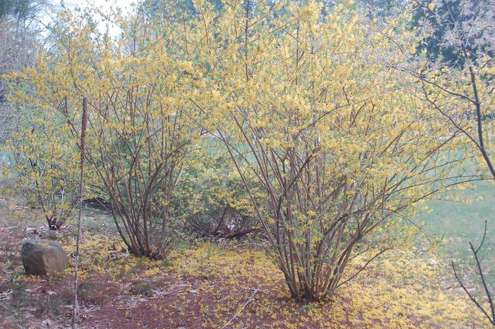 Spring at Whispering Pines