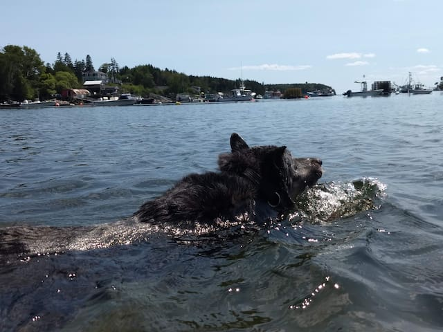 Jaxon the dog swimming at Mackerel Cove - a great swimming spot for everyone!