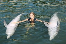 Swim with Dolphins nearby