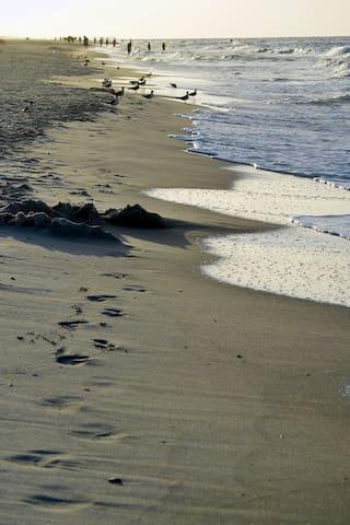 Walk along the shore