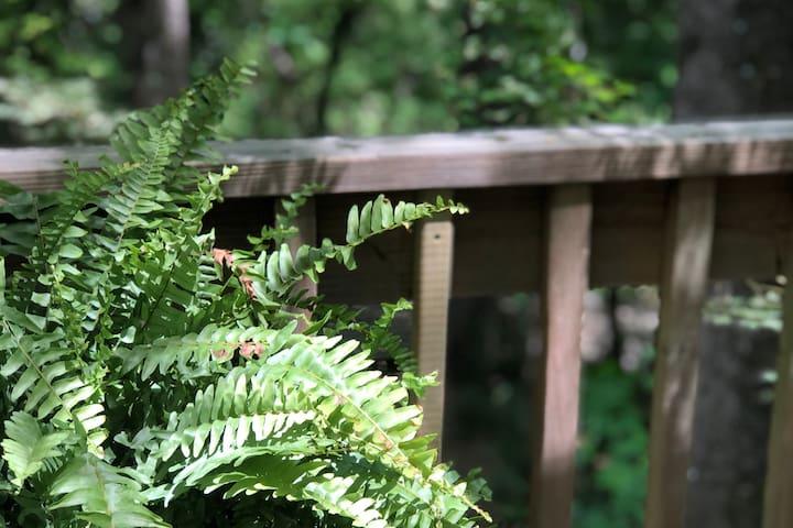 Woodland Guest Nest