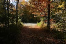 Our driveway, looking toward the road, in fall.