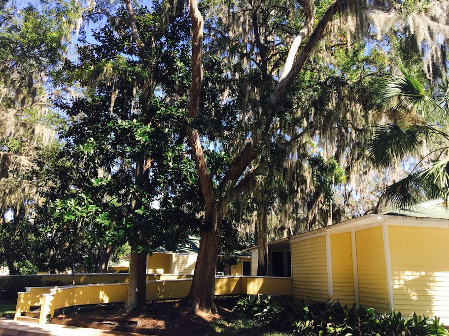 Treehouse styled yellow villa nestled amongst old oak trees draped in Spanish moss! Short Boardwalk leads right to your door!
