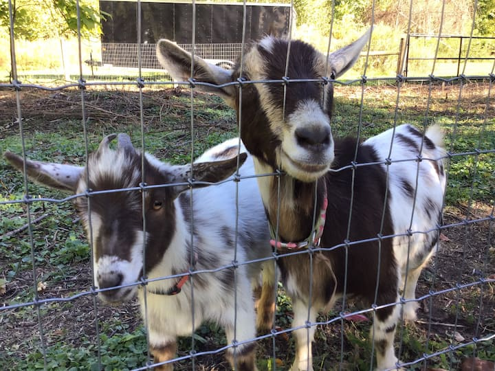 Vonsaladfarm with goats, chickens & bees