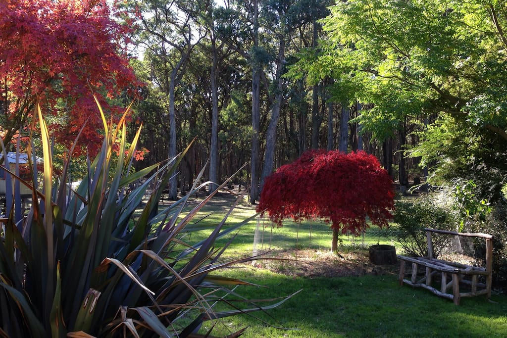 Autumn colour in our garden.