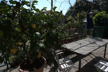 Il limone sul Lago Maggiore - Belgirate