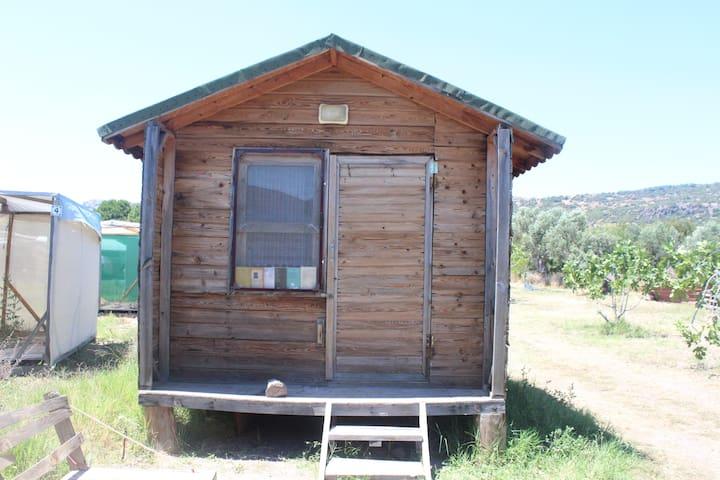 Kadırga Koyu'nda sakin ve yeşil bir kamp alanı