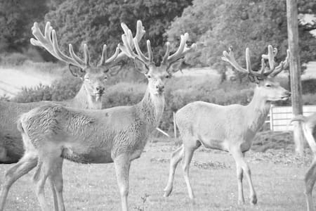 East Dunster Deer Farm B&B - Cadeleigh