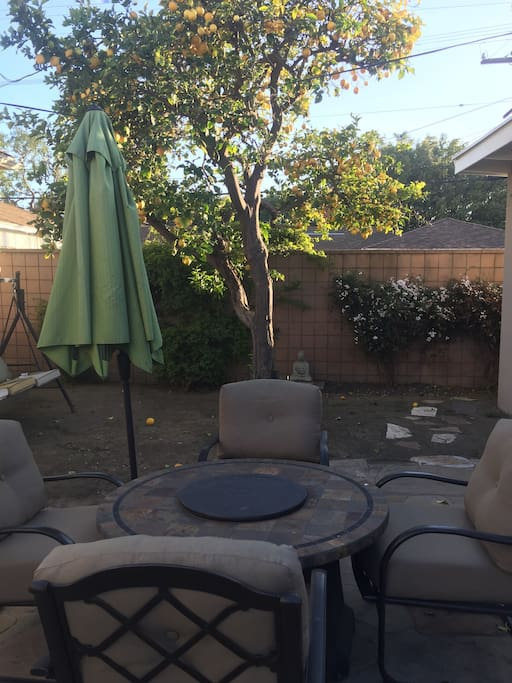 Patio sitting area, unlimited lemons from the organic lemon tree