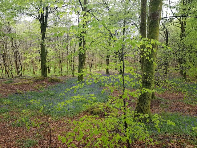 Forest Park Boyle