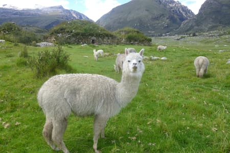 Ideal for a couple - Huaraz - Bed & Breakfast