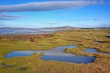 Salt Marshes on Coast