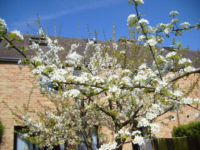 simple room Baraque - Ottignies-Louvain-la-Neuve - Huis