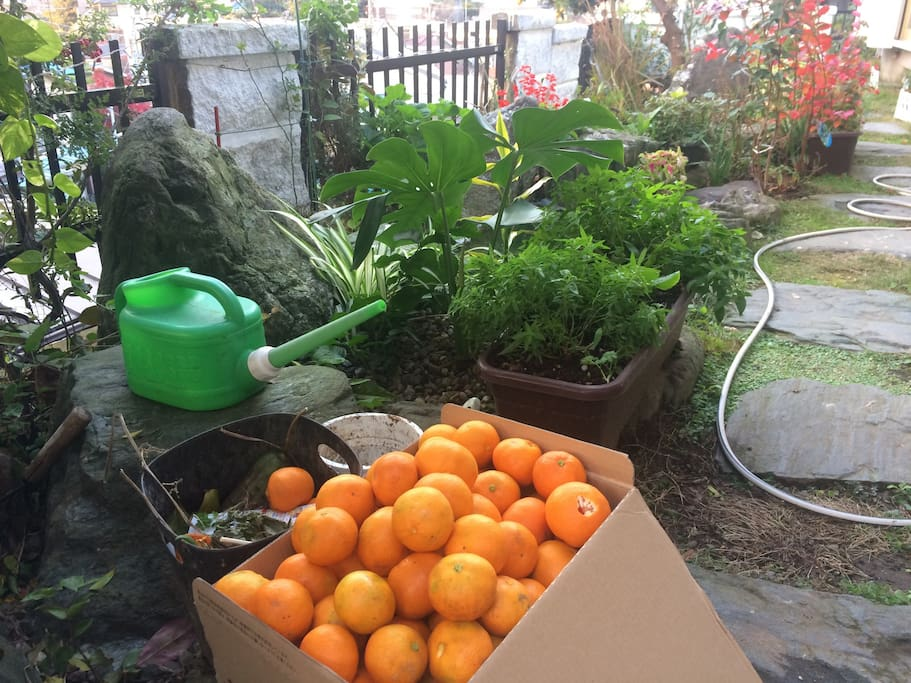 we have many oranges in the Autumn