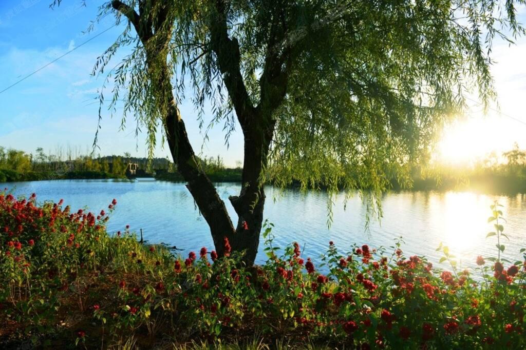 小区门口湿地公园