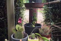 Our daughters cacti garden