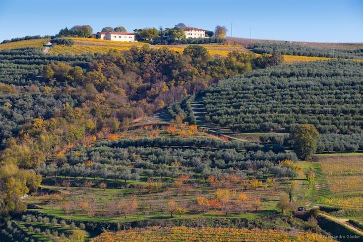 Agriturismo Casa Zen - Marcellise di San Martino Buon Albergo - Bed & Breakfast