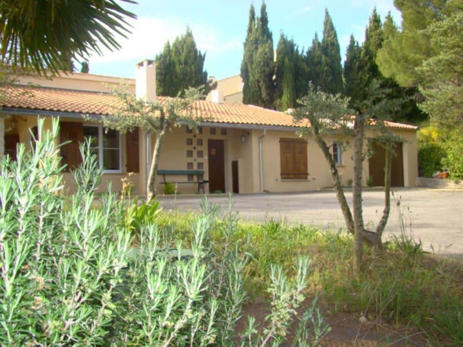 les essences locales: Romarins, oliviers, cyprès, pins....