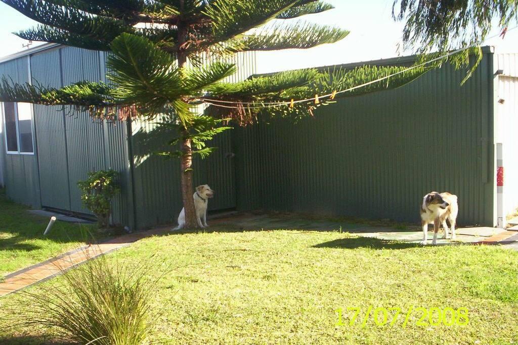 Dog friendly enclosed back garden