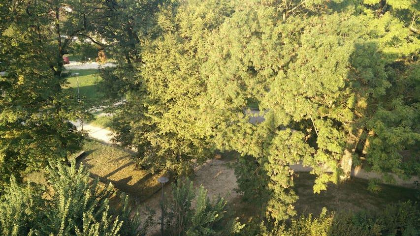 Room's view : the park / vue de la chambre sur le parc
