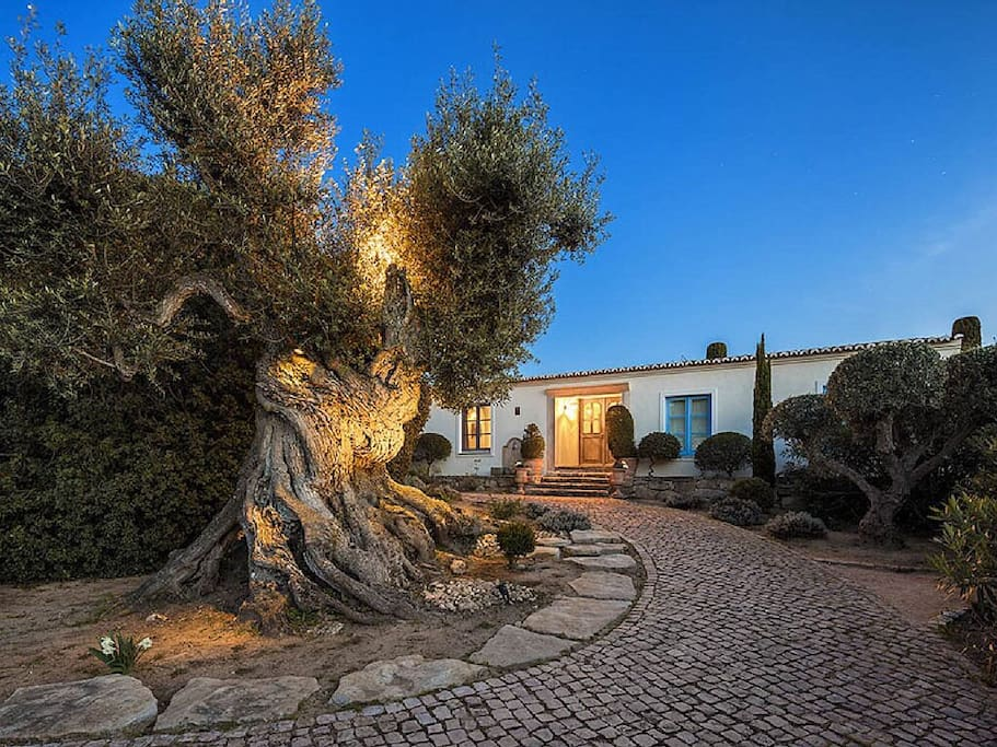 Front entrance with ancient olive tree
