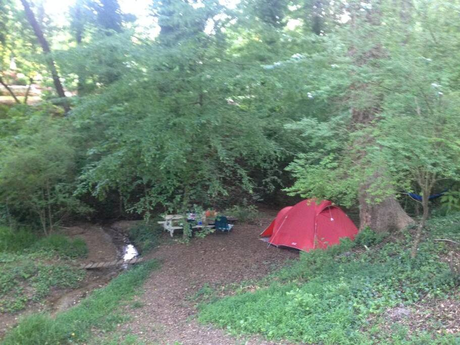 Ample room for multiple tents and hammocks under a canopy of towering oaks.