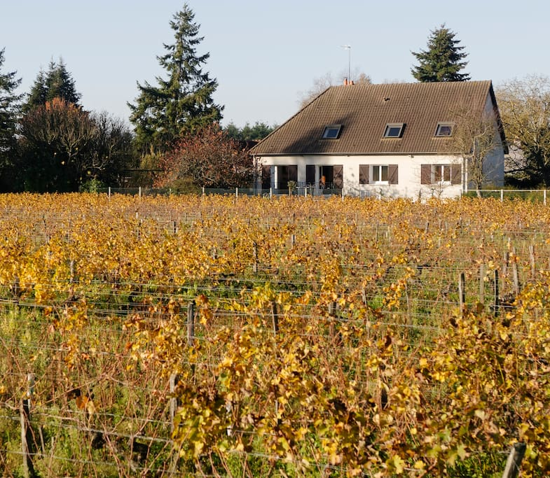 Vue de la maison depuis les vignes