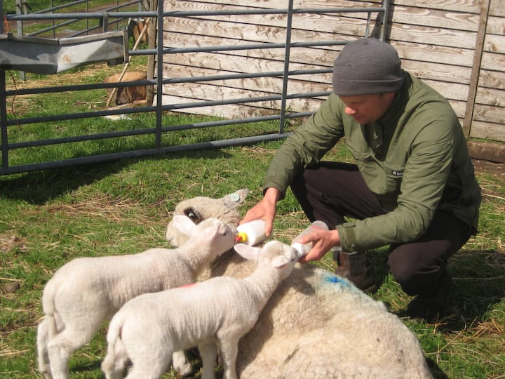 Maybe we have pet lambs that need fed