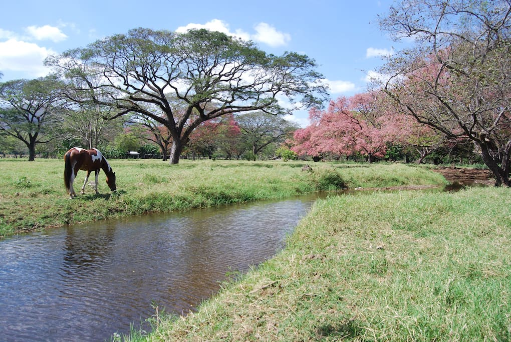 The ranch is an oasis of tropical trees