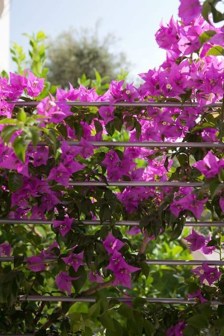 B&B Don Angelo - colori in giardino