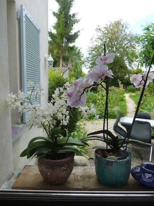 Vue sur jardin depuis le séjour/cuisine