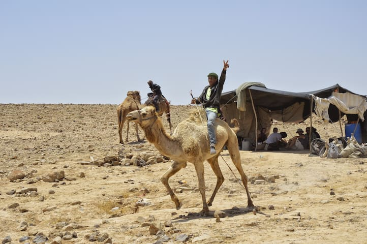 """Behind the camels"" - Eco tours - Eilat"