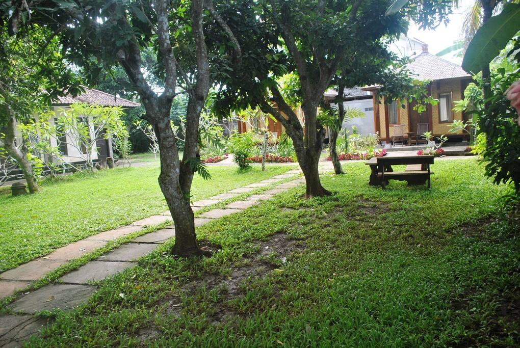 Green grass home