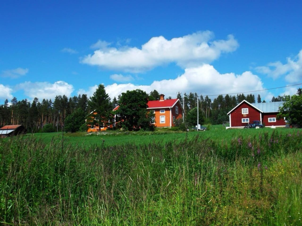 The farm in summer.