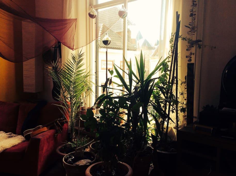 Tropische planten, grote ramen en uitzicht op Deventer binnenstad