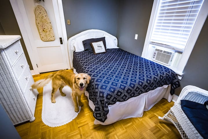 Downstairs bedroom: queen bed (and one dog, not supplied)