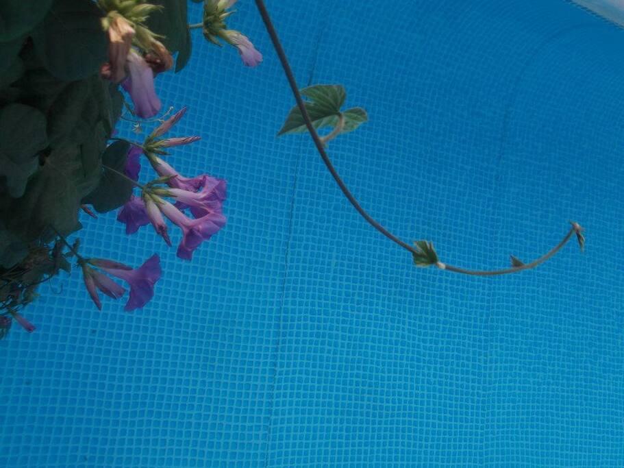 The secret Garden Privet Swimingpool