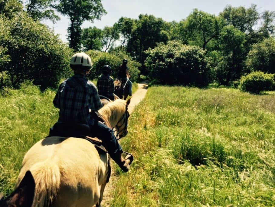 Horse riding near Folsom Lake.