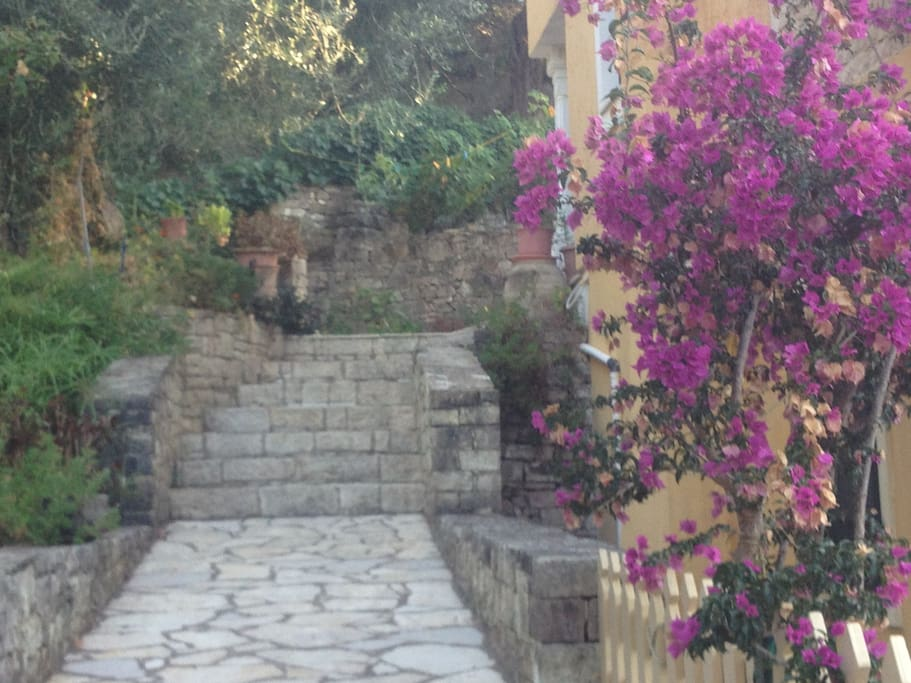 Steps leading to secluded garden and front door