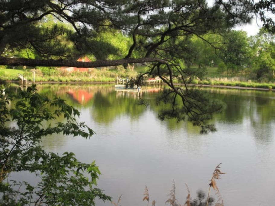 Views of creek