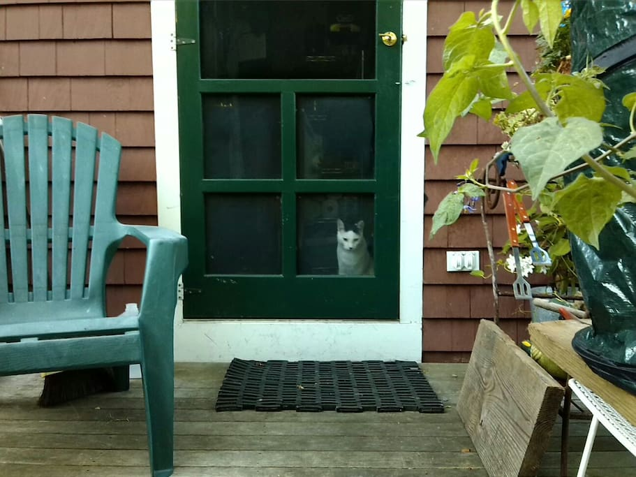 Rabbit the cat greeting his guests.