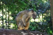 Native tree kangaroo