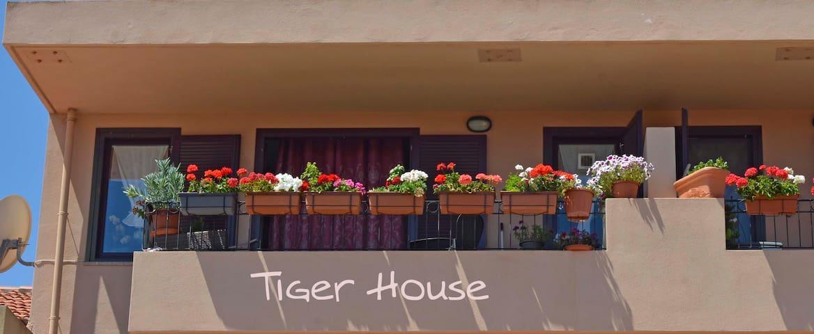 TIGER HOUSE camera CAPO D'ORSO          IUN. P6470