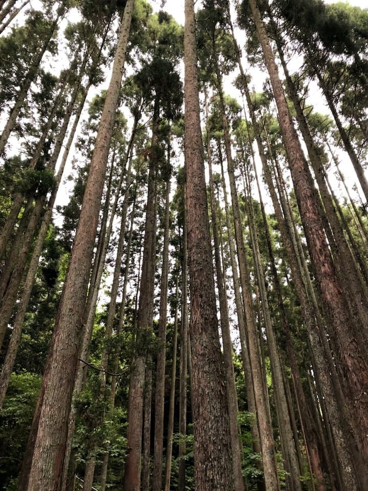 Visiting the secret forest
