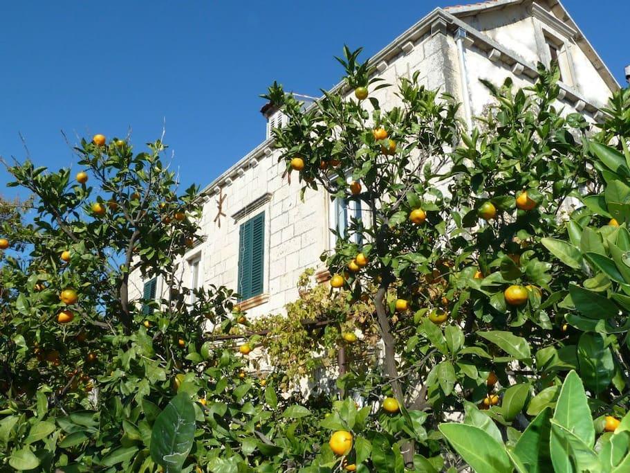 Few hundred years old house, tangerine tree (also have fig, orange, plum, pomegranate and lemon tree :)