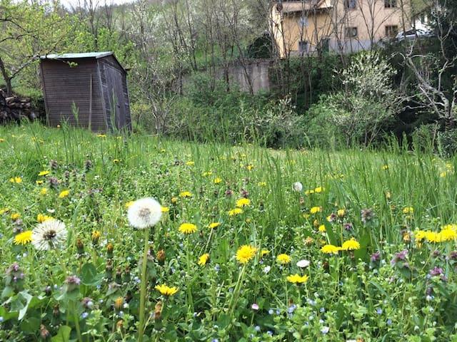 Ex-Mulino con giardino - Villore - House